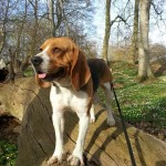 Handy/Butz, Beagle