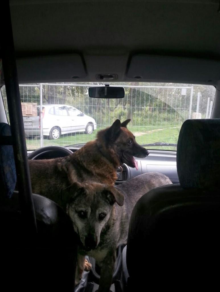 Buska und Norka auto2