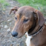 Alberta, 08/2014, Dobermann-Mix