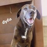 Cyla, 2009, 50 cm, Mischling