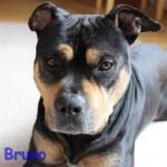 Bruno_profil