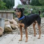 Eddy, ca. 07/2010, ca. 35 cm, Mischling