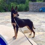 Queeny, 05/2013,30 cm - 7kg, Ratonero