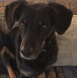 Gandenhund Sara_1