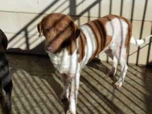 Gnadenhund Andorra_1