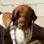 Gnadenhund Andorra_3