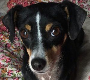 Gnadenhund Bella_1