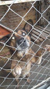 Gnadenhund Ben 6