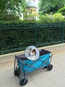 Gnadenhund Bonky_21