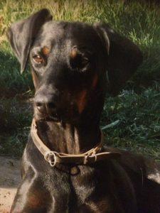 Gnadenhund Digby_1