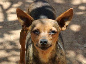 Gnadenhund Greta_2