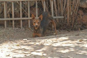 Gnadenhund Greta_6