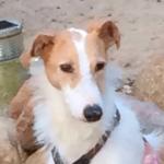 Gnadenhund Laila_2