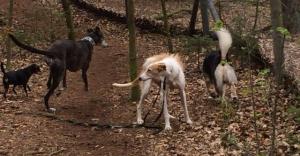 Gnadenhund Laila_7