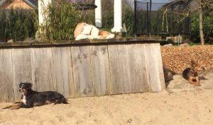 Gnadenhund Laila_9