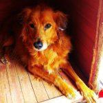 gnadenhund_raffael_1
