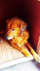 gnadenhund_raffael_2